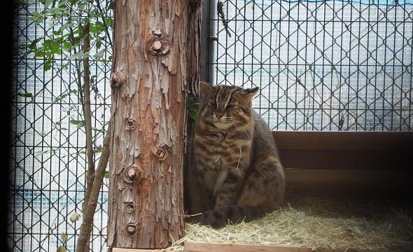 対馬山猫2