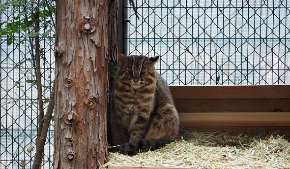 対馬山猫3